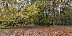 Weg in einem Laubwald