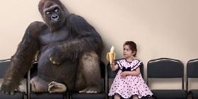 Kind bietet Gorilla Banane an